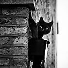 London Cat by Nadean Brennan