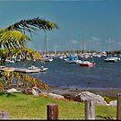 Coconut Grove Marina by longaray2