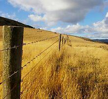golden fence by Simon Penrose