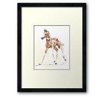 foal Pinto Framed Print