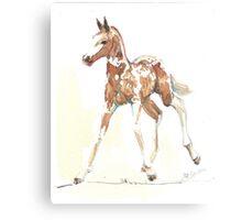 foal Pinto Canvas Print