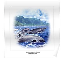 MELON-HEADED WHALE 5 Poster
