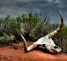 Longhorn Country by Sherry Adkins