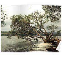 Fairy Tree Over A Lake. Poster