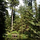 Tree Tops at Capilano Bridge by Equinox