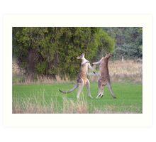 Kangaroos Art Print
