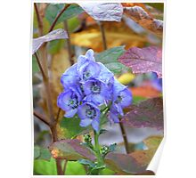 Aconite and Autumn Leaves Poster