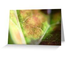 Leaf Closeup Greeting Card