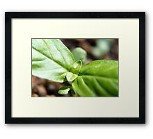 Backgarden leaves Framed Print