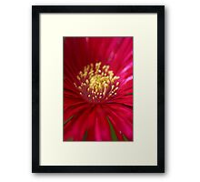 Red or Pink Framed Print