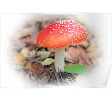 RED  WITH  WHITE SPOTS TOADSTOOL Poster