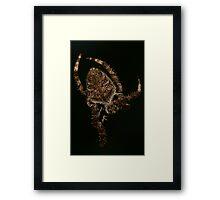 Eriophora transmarina - Garden Orb Weaver Framed Print