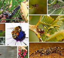 Australian nature shots of creeping flying crawling things! by Chezz