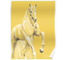 Horse - Andalusian Poster