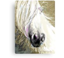 Horse blowing in the wind Metal Print