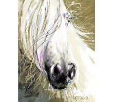 Horse blowing in the wind Photographic Print