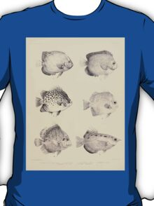 The fishes of India by Francis Day 027 - Holacanthus Annularis, H Xanthurus, Scatophagus Argus, Ephippus Orbis, Drepane Punctata, Toxotes Chatareus T-Shirt