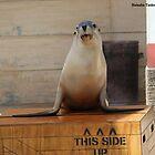 Seal show @ Taraonga Zoo Sydney by porky84