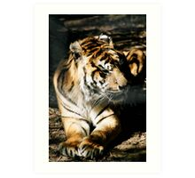 why do we tigers suffer? Art Print