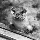 Otter by MadTogger