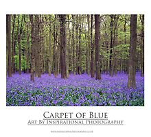 Carpet of Blue Bluebells by NKSharp