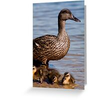 Mother Duck & Her New Babies Greeting Card