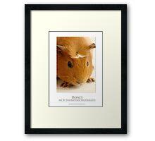Honey - Guinea Pig Framed Print