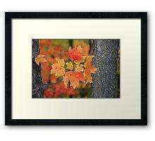 A little peice of autumn Framed Print