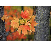 A little peice of autumn Photographic Print