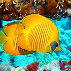 Masked butterflyfish by lilithlita