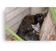 Undomesticated weening kittens - Polokwane Canvas Print