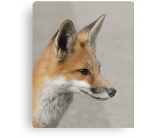 The Profile of a Red Fox Metal Print