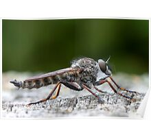 robber fly profile Poster