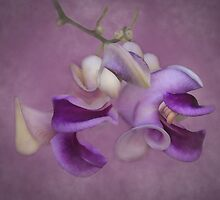 Soft Beauty by CarolM