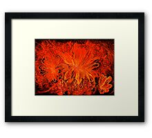 Galactic Bloom Series 1.3  Framed Print