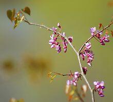 Redbud Branch by Linda Yates