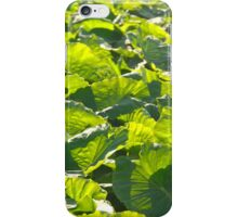 Taro plantation iPhone Case/Skin