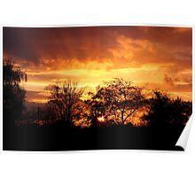 Sunset Through Trees Poster