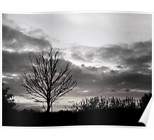 Lonely Tree - Seaton Ross Poster