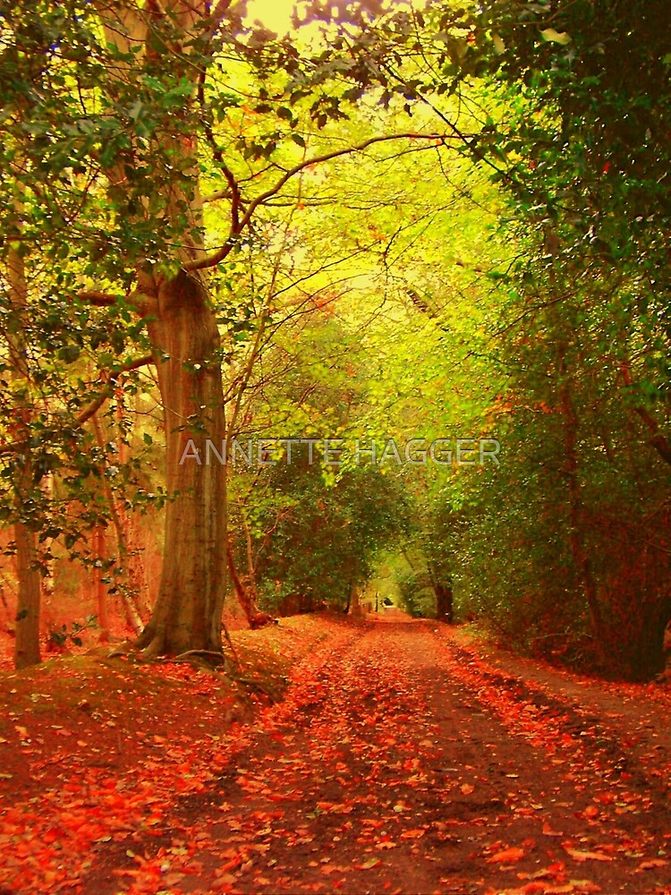 DANBURY WOODS ESSEX  by ANNETTE HAGGER