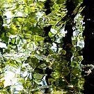 Reflective by Veronica Schultz