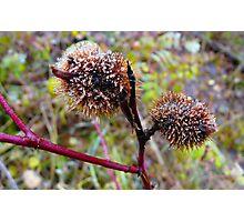 Icy Bug Houses Photographic Print