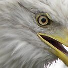Eagle by CourtneyMichell