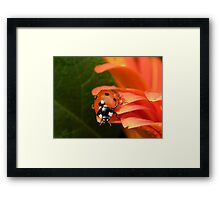 I jump if you want me to.... Framed Print