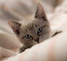 Tina Picard Photography - Kitty by tinapicardphoto