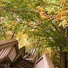 Tina Picard Photographer - Autumn by tinapicardphoto