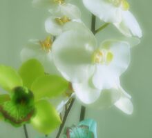 Orchids by Jaee Pathak