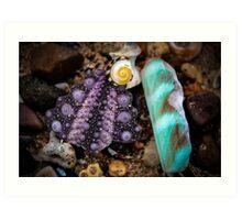 Shells #2 Art Print