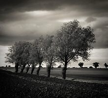 Walsham Le Willows I #4878 by Paul Cooklin