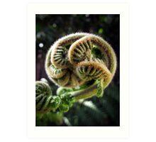 Fern Tree Shoot Art Print